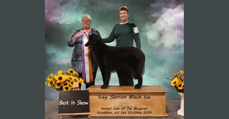 Photo of Icey, a Belgian Shepherd  in Illinois, USA