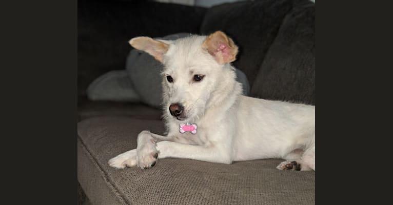 Photo of Zena, a Chinese Village Dog  in China