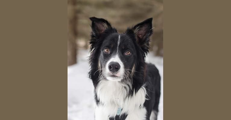 Photo of Jack, a Border Collie and English Shepherd mix in Elkhart Lake, WI, USA