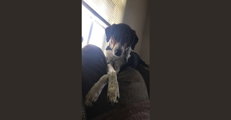 Photo of Willow, a Treeing Walker Coonhound and Australian Shepherd mix in Georgia