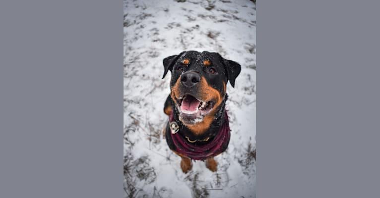 Photo of Daisy Mae, a Rottweiler  in Eatonville, Washington, USA