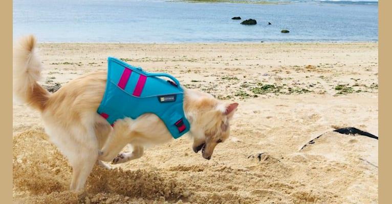 Photo of Winnie Vulpix, a Formosan Mountain Dog  in Okinawa, Japan