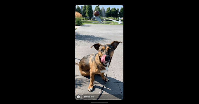 Photo of Ash, a Dachshund, Akita, and Mixed mix in Minneapolis, Minnesota, USA