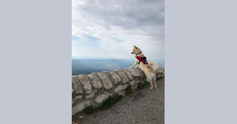 Photo of Obi-Wan, a Pomsky  in Gripport, France