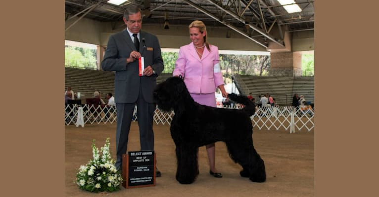 Photo of Nagyka, a Black Russian Terrier