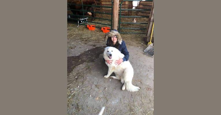 Photo of Raina, a Maremma Sheepdog  in Waupaca, Wisconsin, USA