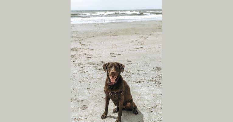 Photo of Jessie, a Labrador Retriever and German Shepherd Dog mix in West Columbia, South Carolina, USA