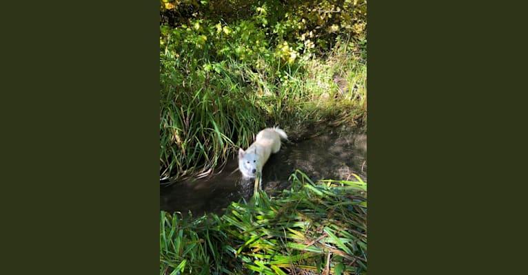 Photo of Koa, a   in Klamath Falls, Oregon, USA