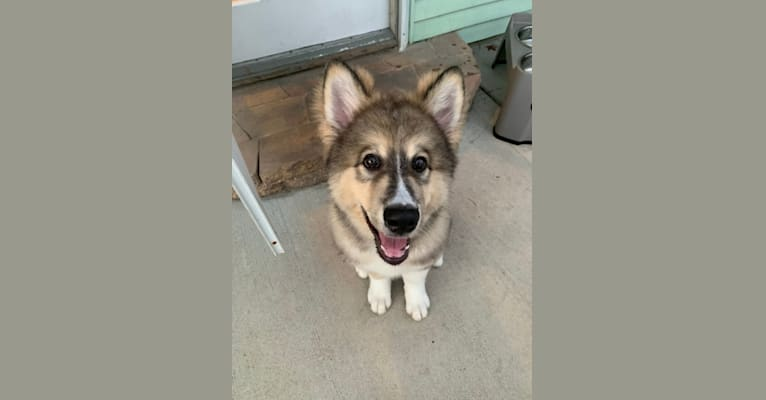 Photo of Winston, a   in 10122 Peck Lake Rd, Lowell, MI, USA
