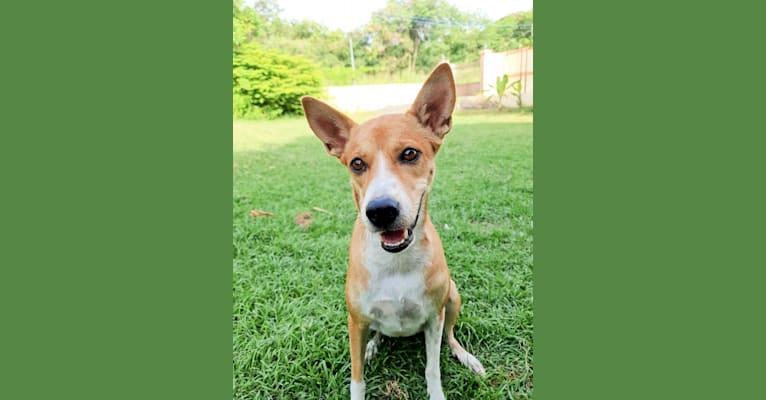 Photo of Alles, a Southeast Asian Village Dog  in Bangkok, Thailand