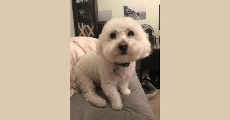 Photo of JJ, a Maltese, Poodle (Small), and Mixed mix in Union City, California, USA