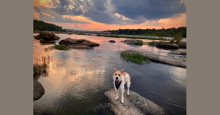 Photo of Millie Lu, a German Shepherd Dog, American Pit Bull Terrier, Great Pyrenees, and Boston Terrier mix in Richmond, Virginia, USA