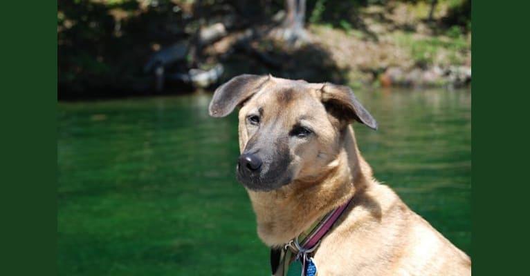 Photo of Mavis, a Southeast Asian Village Dog  in กทม, Bangkok, Thailand