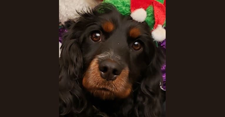 Photo of LATTE,   in H & H Red Canon Canines, Cooper Ave, Cañon City, CO, USA