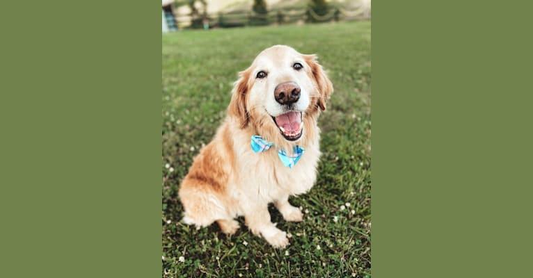 Photo of Jake, a Golden Retriever, Cocker Spaniel, and Mixed mix in Kentucky, USA