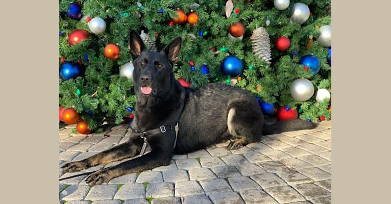 Photo of Jiro, a German Shepherd Dog  in Virginia, USA