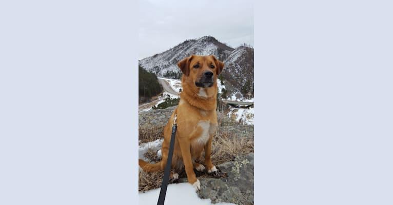 Photo of Korra, a Border Collie, Pembroke Welsh Corgi, Miniature/MAS-type Australian Shepherd, German Shepherd Dog, and Siberian Husky mix in Rapid City, South Dakota, USA