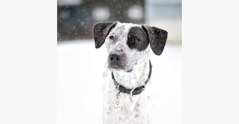 Photo of Auggie, a Labrador Retriever, Chow Chow, American English Coonhound, Russell-type Terrier, and Mixed mix in Georgia, USA