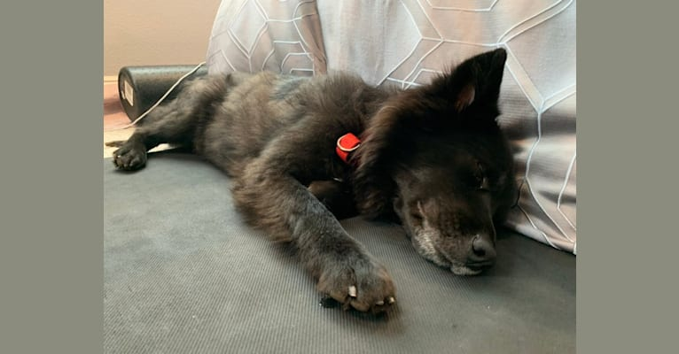 Photo of Mojo, a Formosan Mountain Dog  in Taiwan
