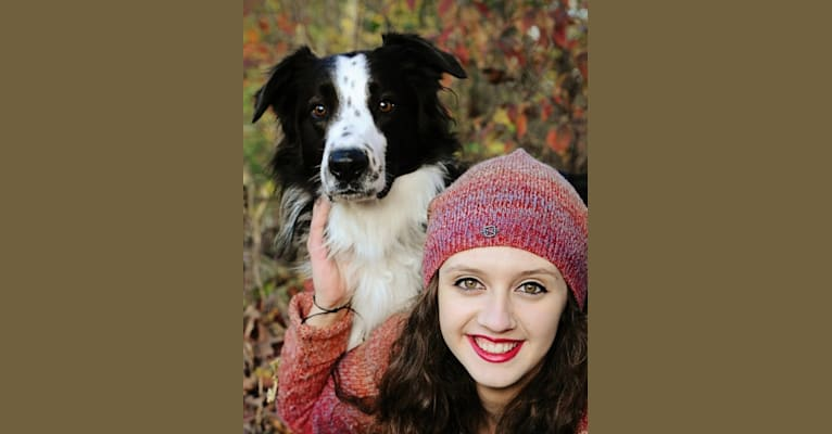 Photo of Thorn, an English Shepherd  in Paulding, OH, USA