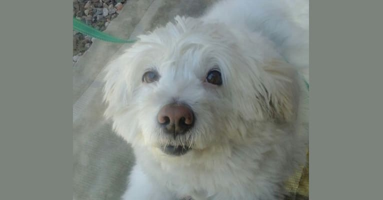 Photo of Snow White, a Formosan Mountain Dog  in Davao Region, Philippines
