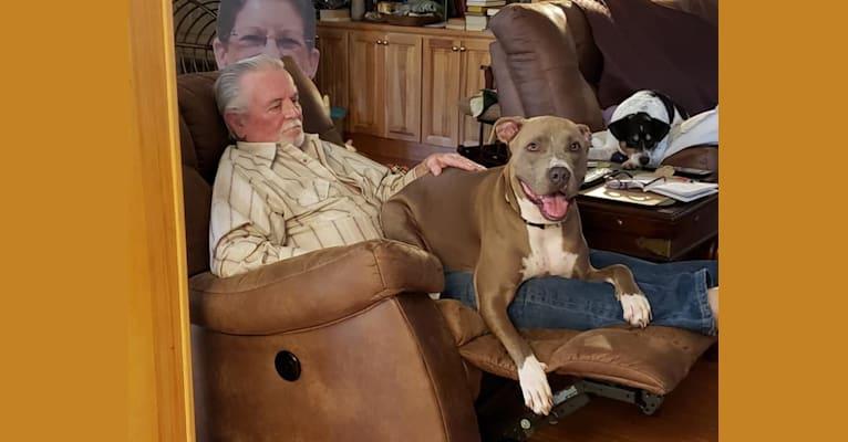 Photo of Nolan Blue, an American Bully  in Golden, Colorado, USA