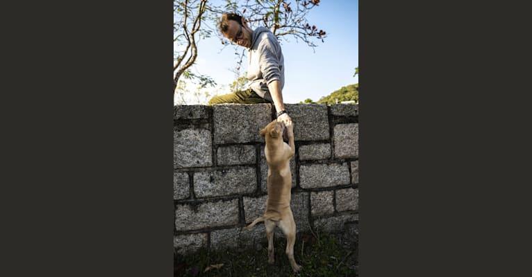 Photo of Delilah Pei, a Hong Kong Village Dog  in Hong Kong