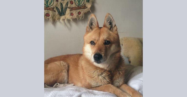 Photo of el, an East Asian Village Dog