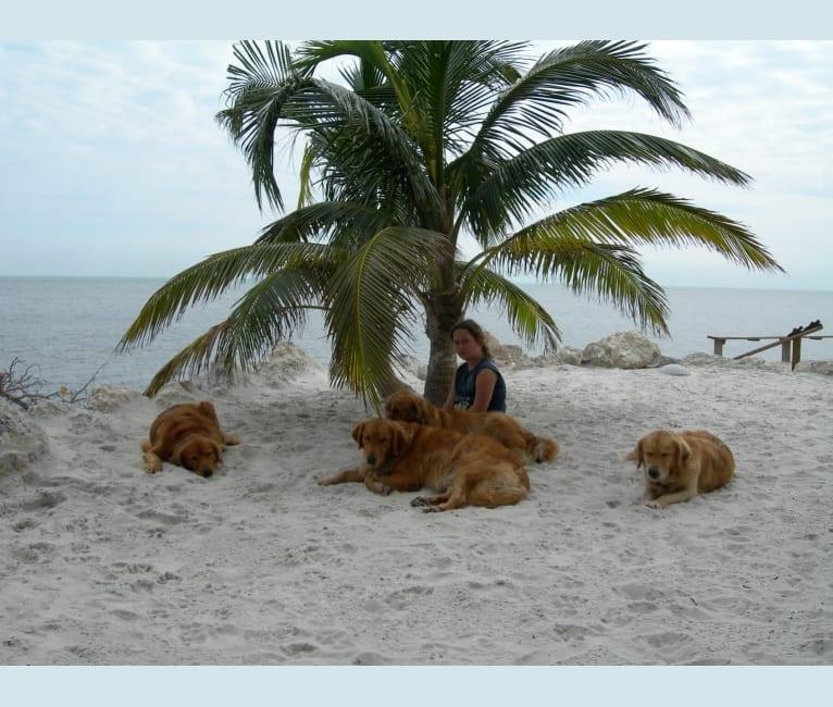 Photo of Uzuri, a Golden Retriever  in Miami, Florida, USA