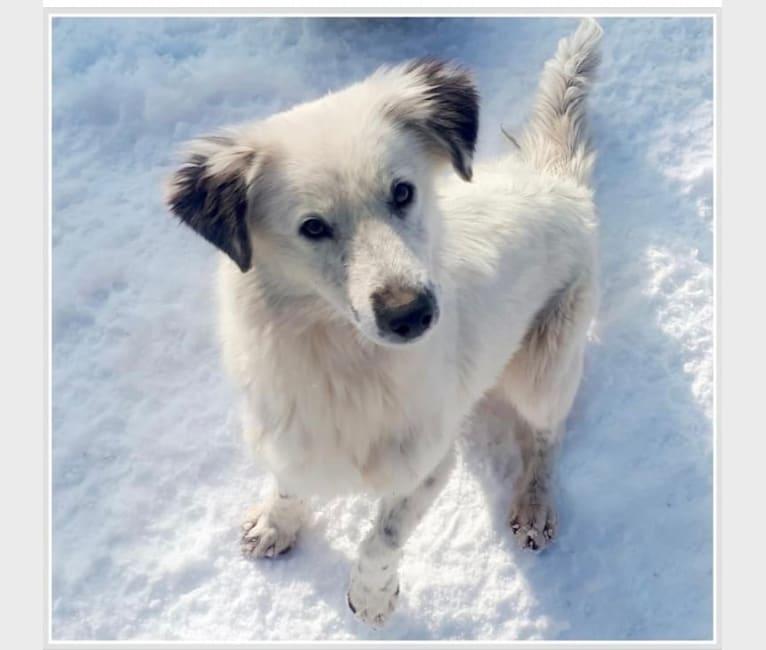 Photo of Kuzya, an Eastern European Village Dog  in Armenia
