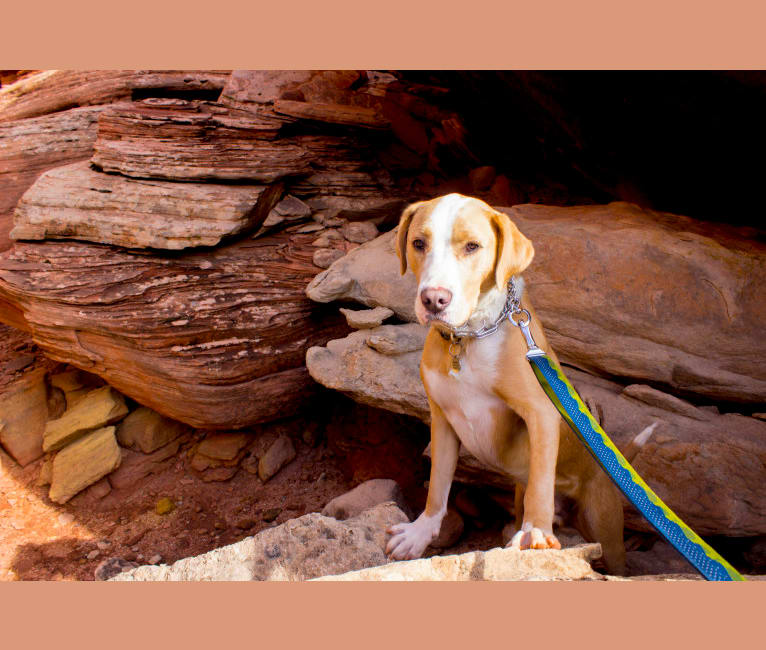 Photo of Fisher, an American Pit Bull Terrier, Boxer, and Mixed mix in New Mexico, USA