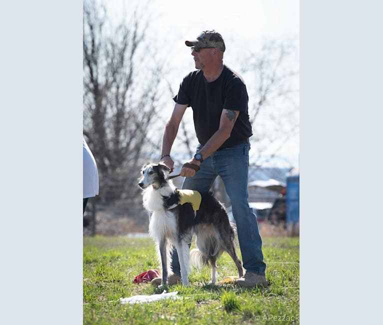 Photo of Kohl, a Silken Windhound