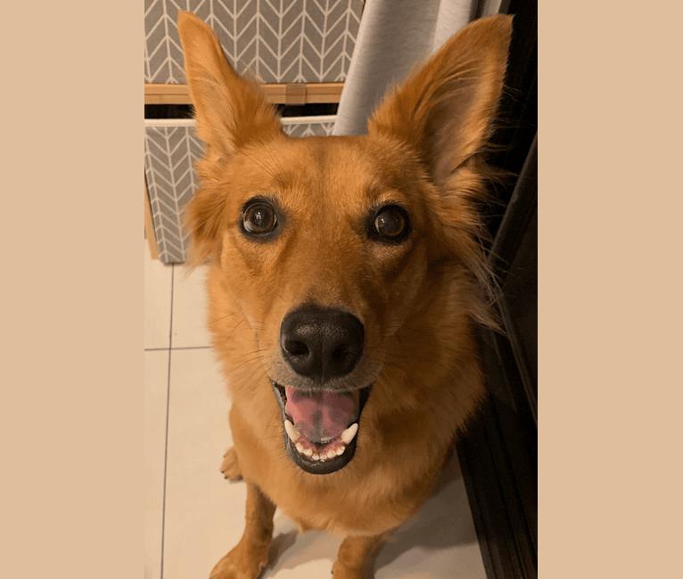 Photo of Winnie, a Formosan Mountain Dog  in Taiwan