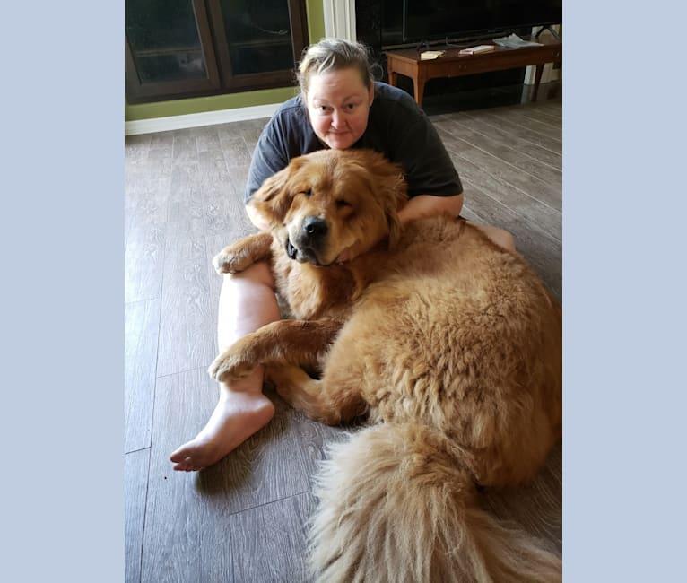 Photo of Kreka, a Tibetan Mastiff  in Romania