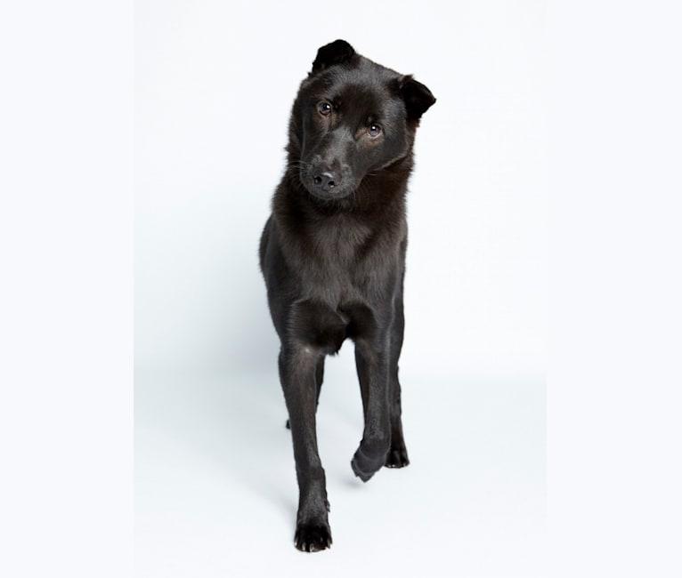 Photo of Baloo Stern, a Hong Kong Village Dog  in Hong Kong