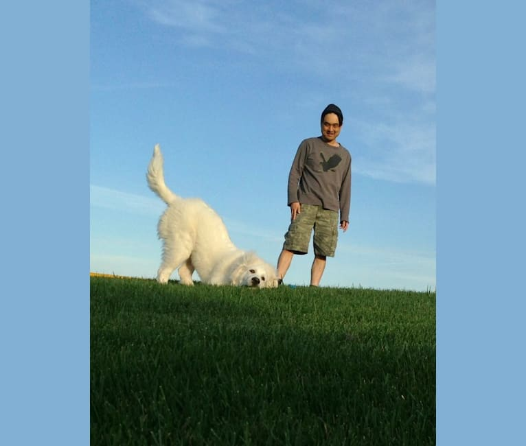 Photo of keiki, a Great Pyrenees and Mixed mix in Georgetown, CA, USA