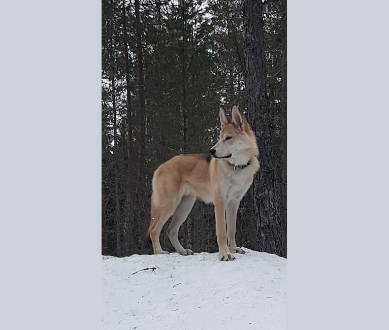 Photo of Lupo, a   in Kouvola, Suomi