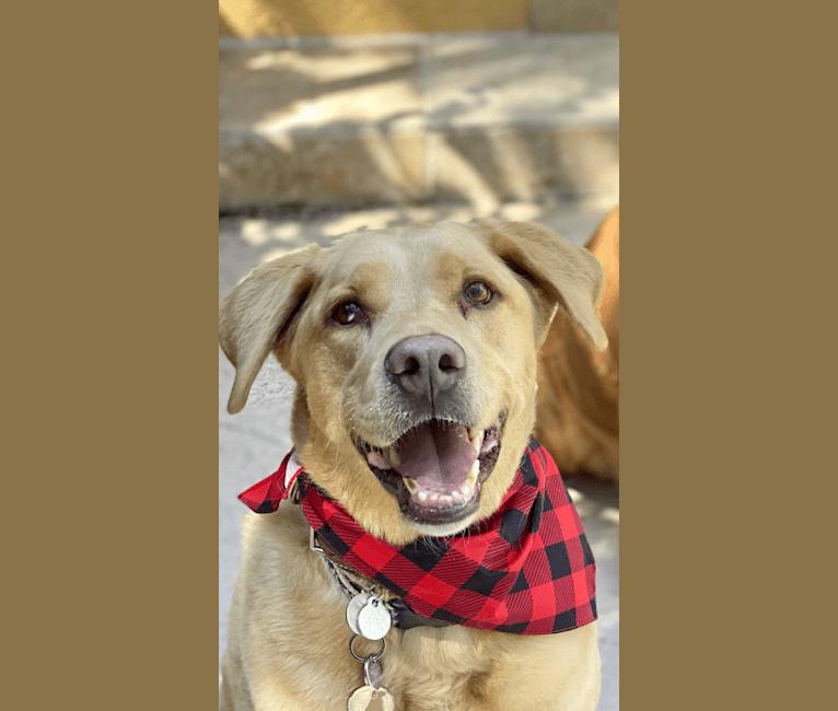 Photo of Diego, a Labrador Retriever and Siberian Husky mix