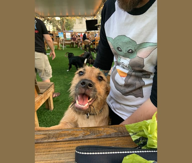 Photo of Triton, a Mountain Cur, Norwegian Elkhound, and Mixed mix in St. Petersburg, Florida, USA