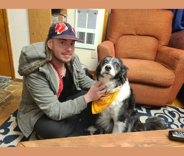 Photo of Billy, a Border Collie and American Pit Bull Terrier mix in Sunnyside, Washington, USA