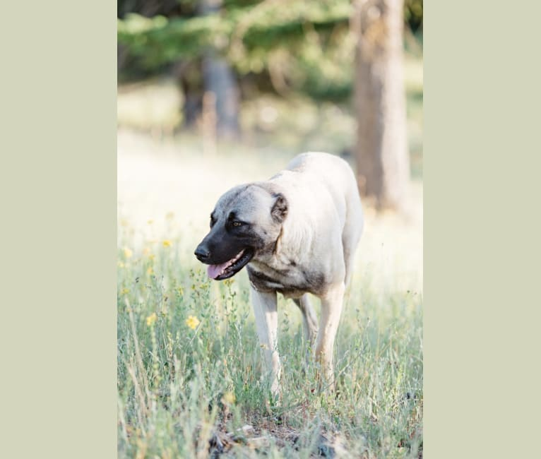 Photo of Timber,