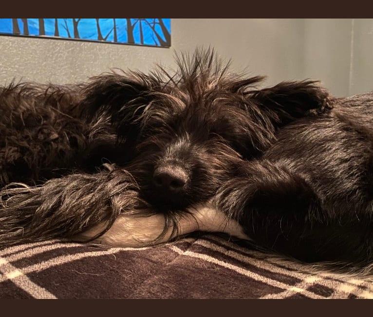 Photo of Taco, an Australian Cattle Dog, Labrador Retriever, Rottweiler, Siberian Husky, and Mixed mix in Silver City, New Mexico, USA