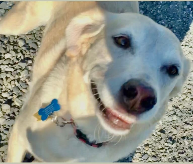 Photo of Sam, an American Village Dog  in Cozumel, Mexico