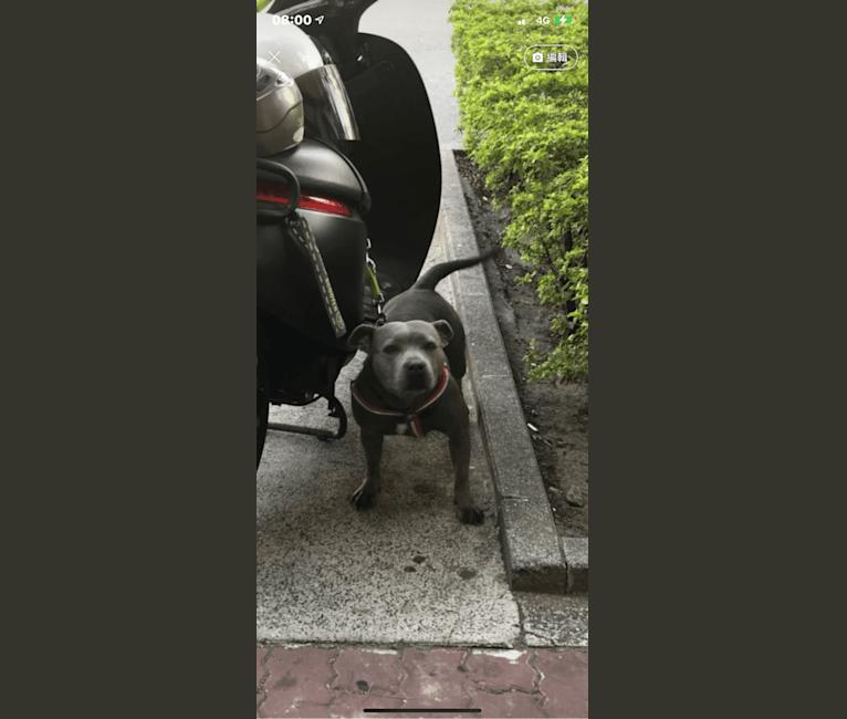 Photo of CBI202017, a Staffordshire Bull Terrier  in 台灣