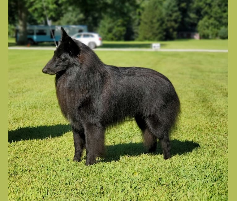 Photo of Gery, a Belgian Shepherd  in Budapest, Hungary