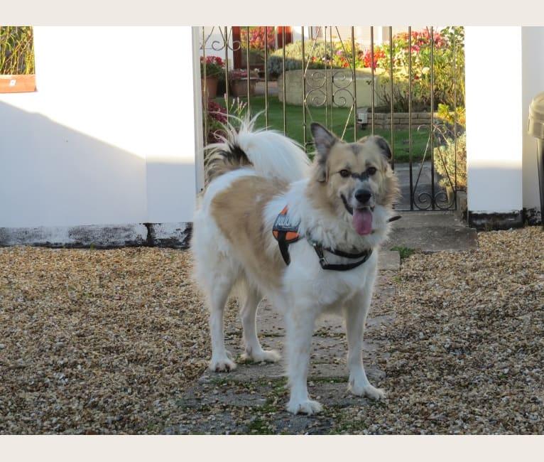 Photo of Aslan, an European Village Dog