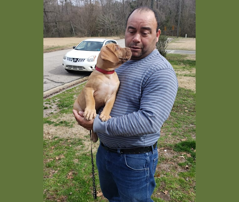Photo of AFYA, a Boerboel  in Fayetteville, NC, USA