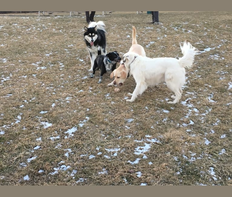 Photo of Tubby, a German Shepherd Dog, Labrador Retriever, Shih Tzu, American Pit Bull Terrier, Chow Chow, and Mixed mix in Alabama, USA
