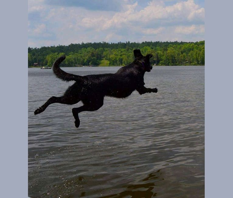 Photo of Anya Marie, a Labrador Retriever, Redbone Coonhound, and German Shepherd Dog mix in Blossburg, Pennsylvania, USA