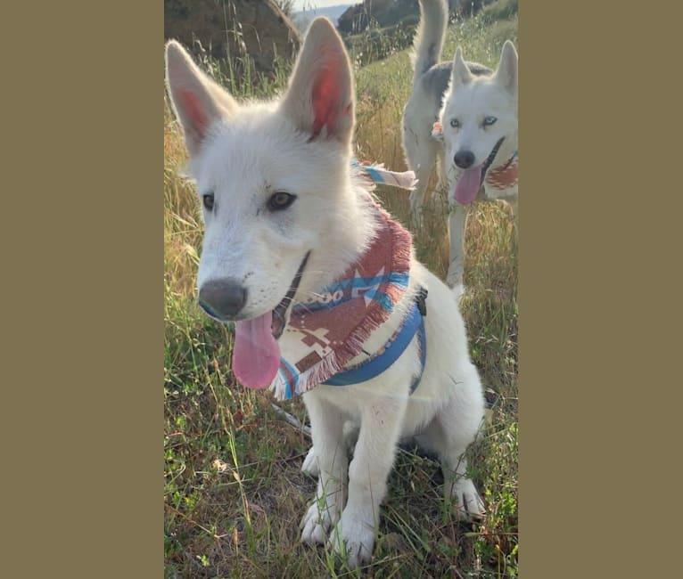Photo of Shiloh, a